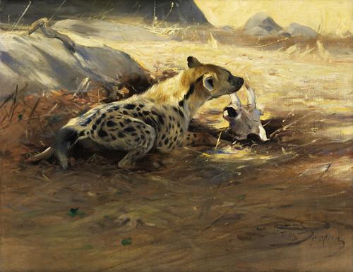 Art Prints of Hyena by Wilhelm Kuhnert
