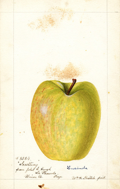 Art Prints of Lucinda Apple II by William Henry Prestele