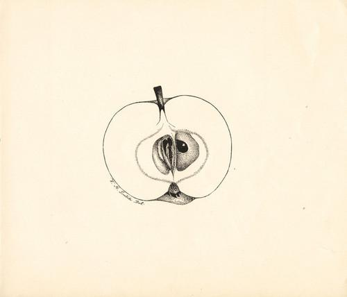 Art Prints of Red Transparent Apple by William Henry Prestele