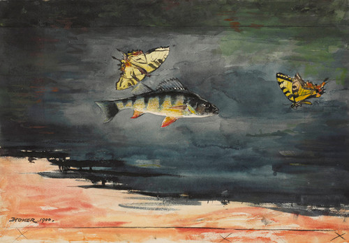 Art Prints of Fish and Butterflies by Winslow Homer