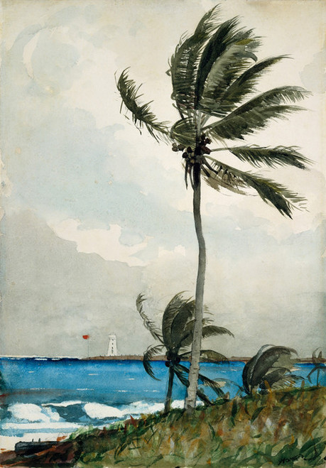 Art Prints of Palm Tree Nassau by Winslow Homer