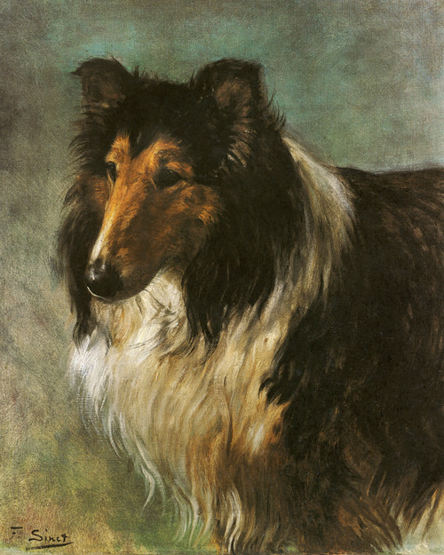Champion Collie Seedley Sterling by F. Sinet