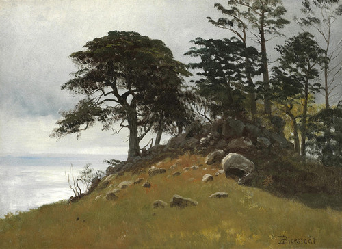 Art Prints of Cypress Point Monterey by Albert Bierstadt