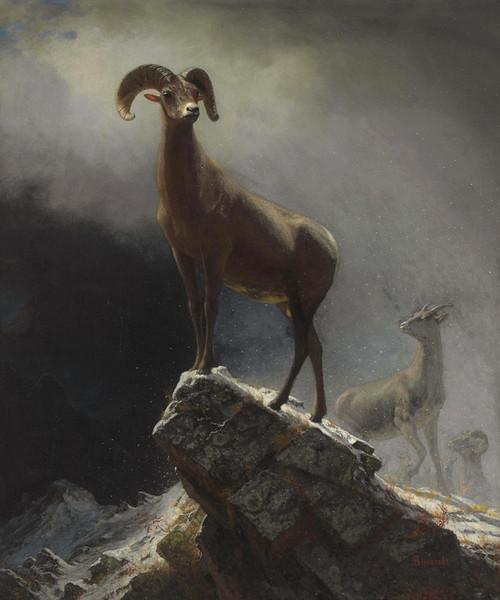 Art Prints of Rocky Mountain Sheep or Big Horn, Ovis Montana by Albert Bierstadt