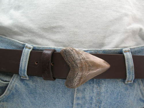 Shark Tooth 2 inch buckle in bronze with brown patina  Shown on a 1.5 (38mm) belt