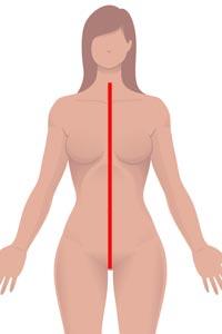f-front-torso3.jpg