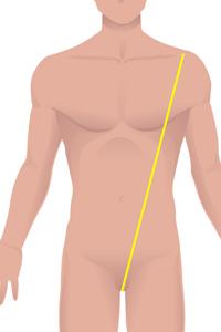 m-front-torso.jpg