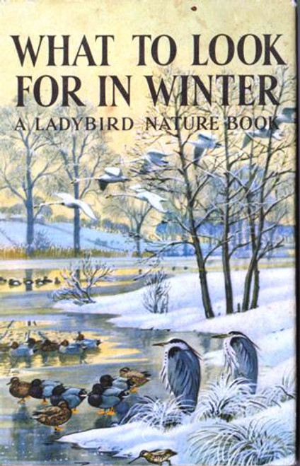 Ladybird / What to Look for in Winter