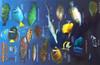 Fish ID Card Galapagos