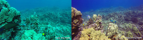 Comparison with and without red scuba filter