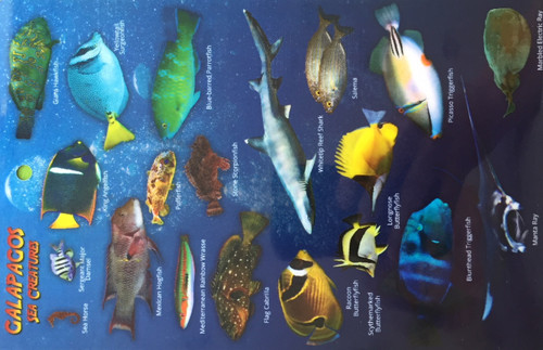 Fish ID Card Galapagos