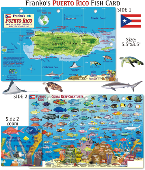 Waterproof Fish ID Card - Puerto Rico