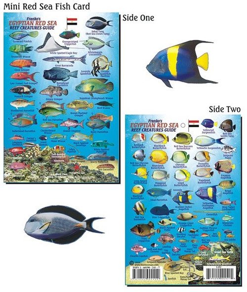 Waterproof Fish ID Card - Red Sea