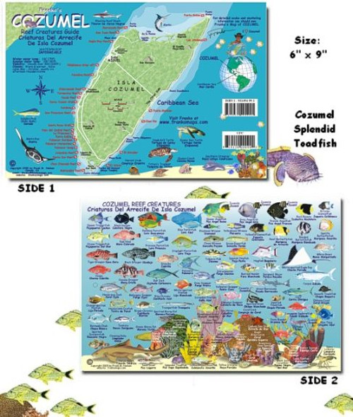 Waterproof Fish ID Card - Cozumel