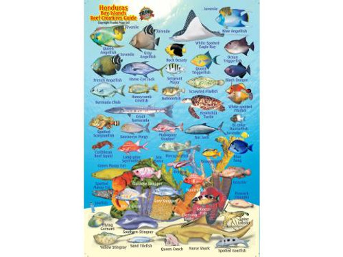 Waterproof Fish ID Card - Honduras