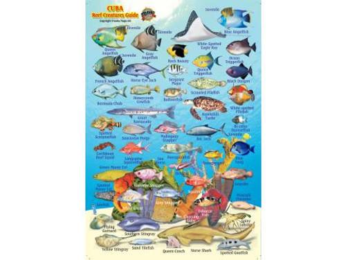 Waterproof Fish ID Card - Cuba