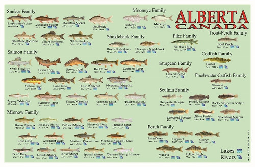 Alberta Fish Identification Waterproof Card