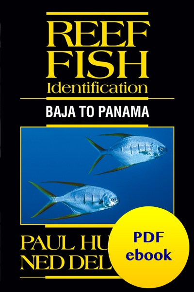 fish-cover-ebook-baja.jpg