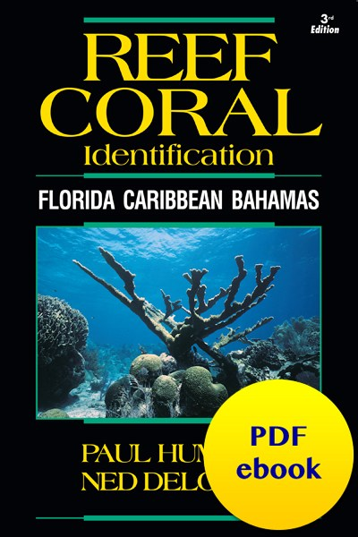 fish-cover-ebook-coral.jpg