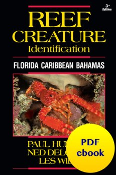 fish-cover-ebook-creature.jpg