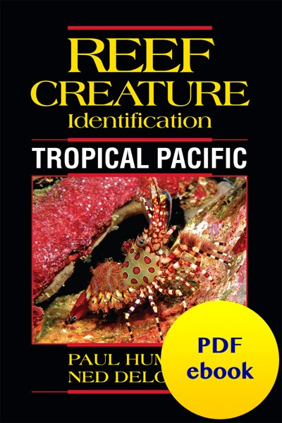 fish-cover-ebook-tropical-pacific-creature.jpg