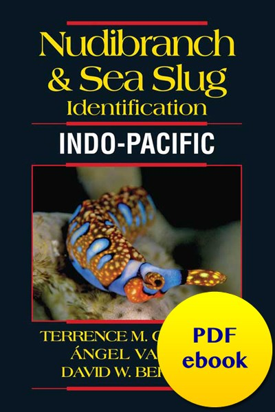 fish-cover-ebook-tropical-pacific-nudibranch.jpg