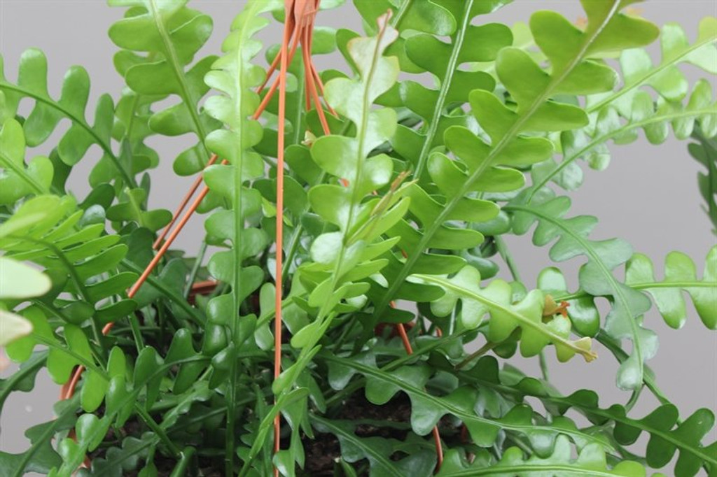 Wavy green leaves with fishbone pattern