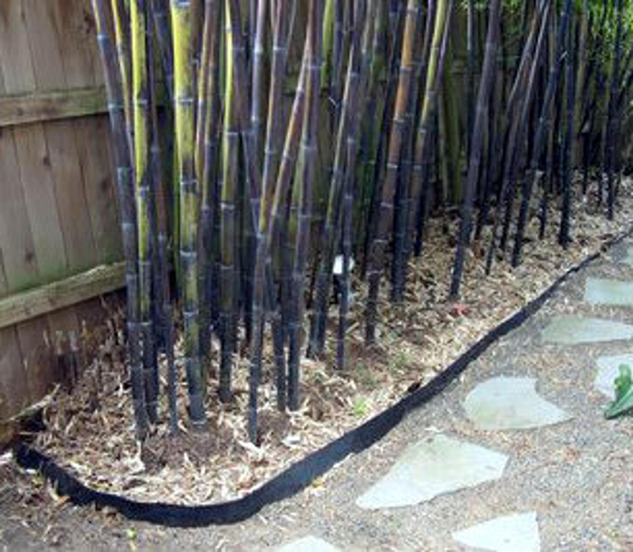 Prevent rhizomes spreading