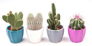 Bright cactus gift set