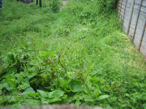 How to stop weeds from neighbours garden  through the fence or under the fence