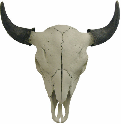 Plain Bull Buffalo Skull w. Horn Covers