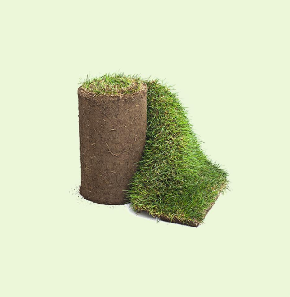 Scottish Lawn Turf