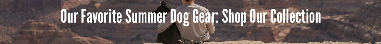 Favorite summer dog gear collection