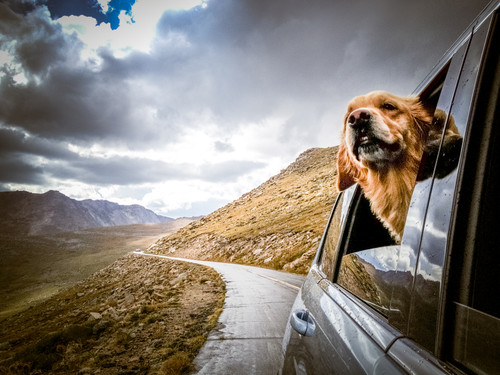 Tips for Traveling with a Pet