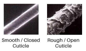 Comparison of a smooth and rought hair cuticles